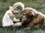 Собака примиритель