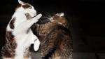 Кот противник