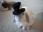 Кролик учитель