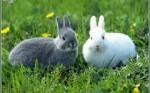 Кролики супруги
