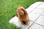 Кролик начальник