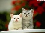 Кот с Котом