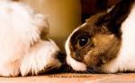Кролик с Собакой