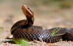 Змея партнер