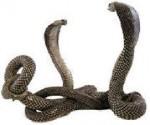 Змея противник