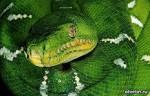 Змея учитель