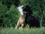 Лошадь противник
