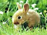 Обезьяна с Кроликом