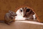 Кот с Крысой