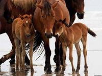Лошадь в Семье