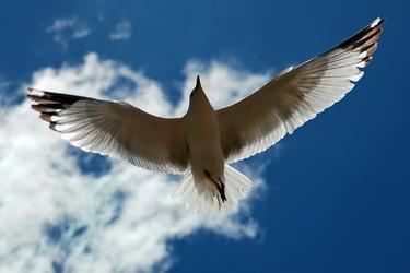 Совершая прогулки в структуру ветра, у вас вырастают крылья,